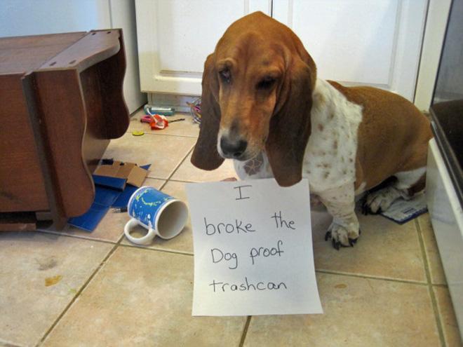 9-perros-que-no-pueden-decir-que-son-inocentes_5