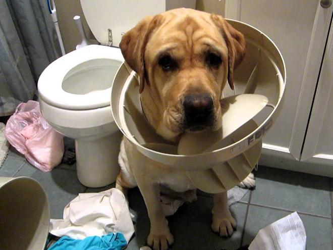 9-perros-que-no-pueden-decir-que-son-inocentes_6