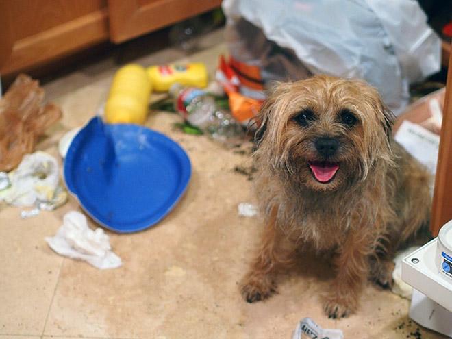 9-perros-que-no-pueden-decir-que-son-inocentes_9