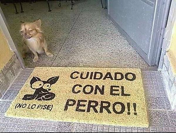 Cuidado-con-el-perro-no-lo-pise