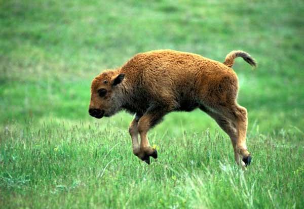 animales-bebes-foto-1