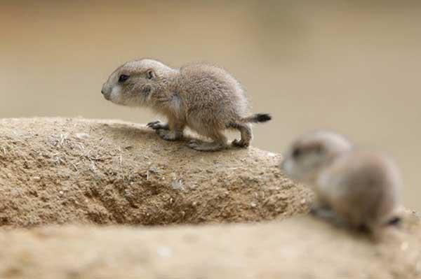 animales-bebes-foto-12