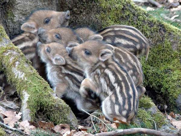 animales-bebes-foto-2