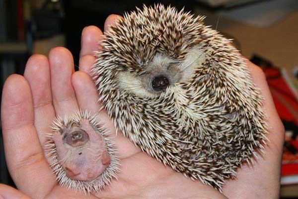animales-bebes-foto-29
