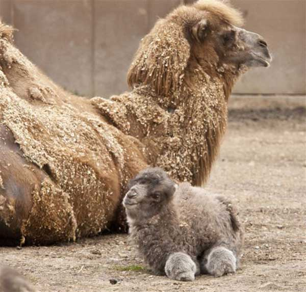 animales-bebes-foto-45