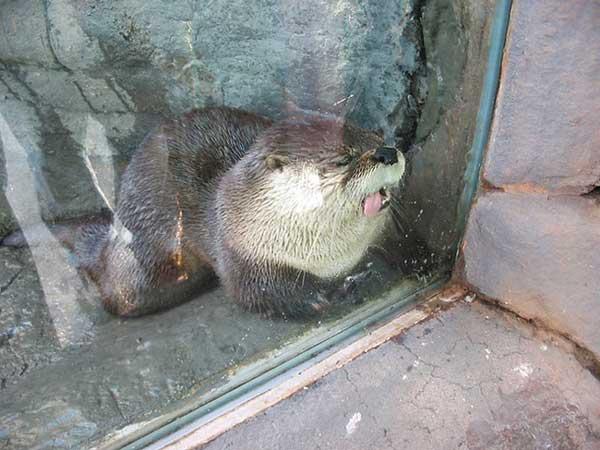 animales-ventanas-foto-4