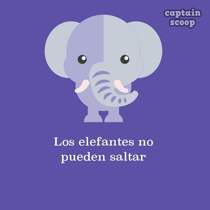 animales09elefante