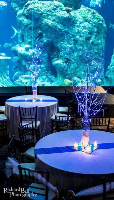 boda-acuario15