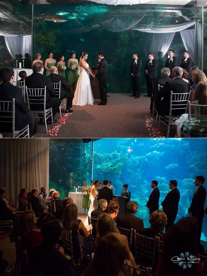 boda-acuario5