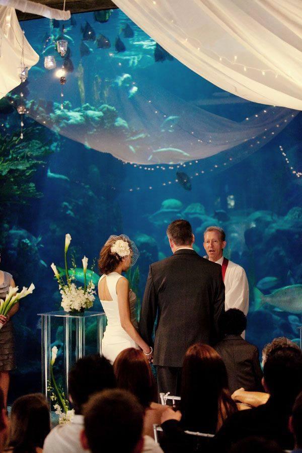 boda-acuario9