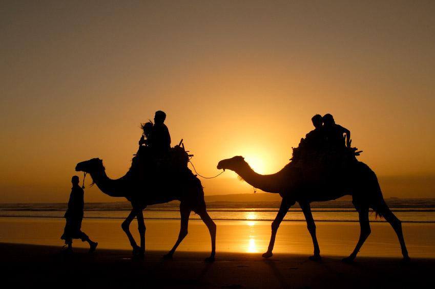 camello-1