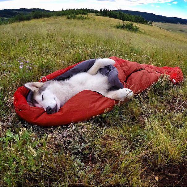 camping-with-dog-ryan-carter-107__605