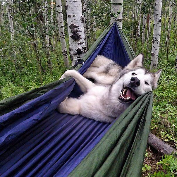 camping-with-dog-ryan-carter-123__605