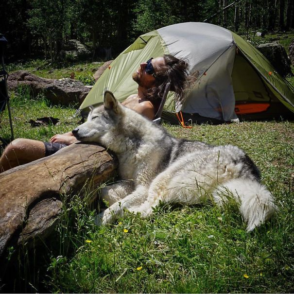 camping-with-dog-ryan-carter-1__605