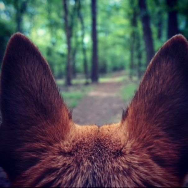 camping-with-dog-ryan-carter-35__605
