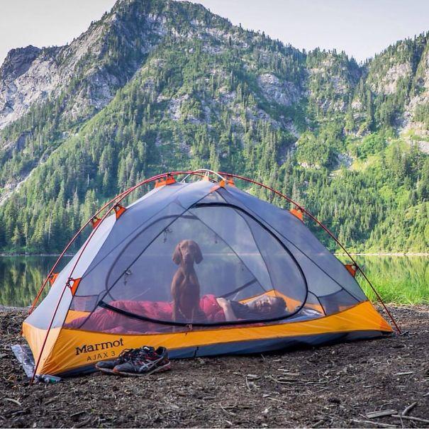 camping-with-dog-ryan-carter-52__605