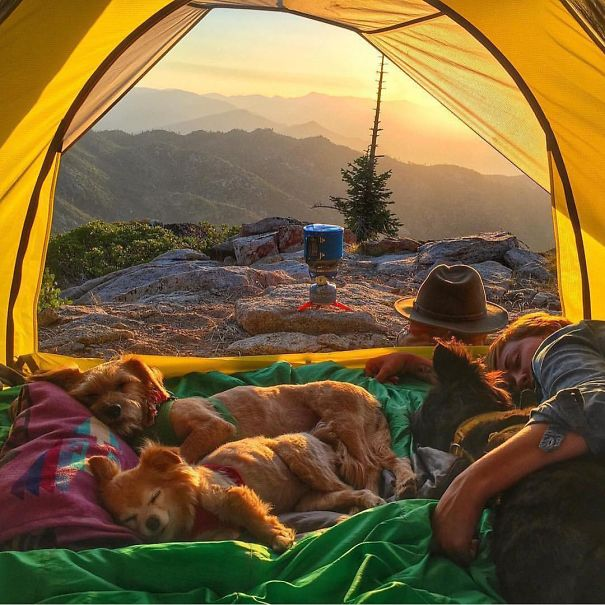 camping-with-dog-ryan-carter-85__605