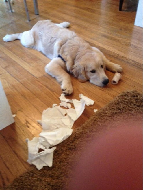 dogs-caught-in-the-act-13