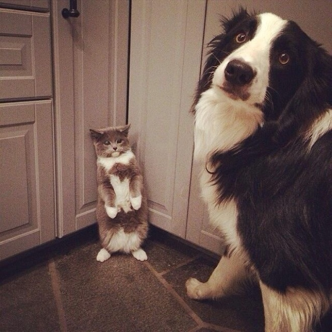 dogs-caught-in-the-act-7