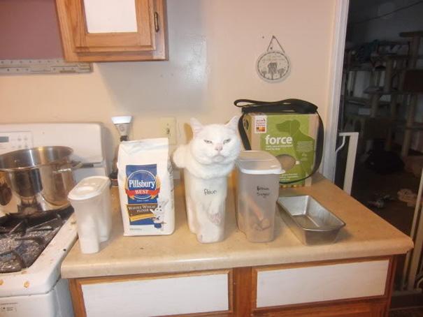 funny-cat-logic-52__605