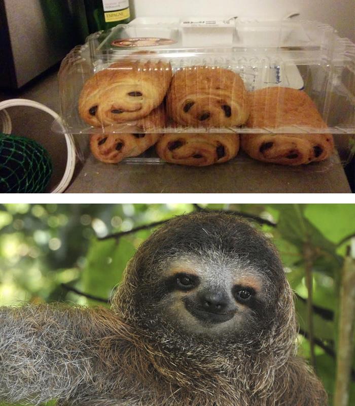 similar-things-look-alike-17__700