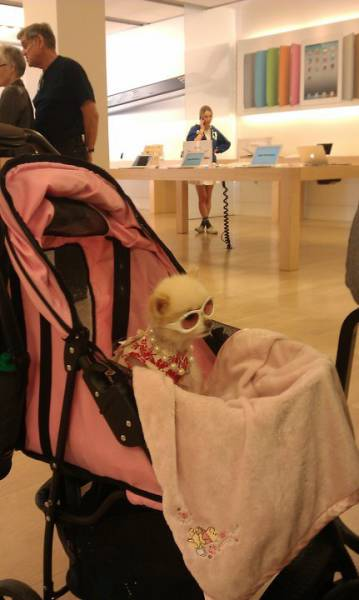 the_craziest_things_that_have_ever_happened_in_the_apple_store_640_12
