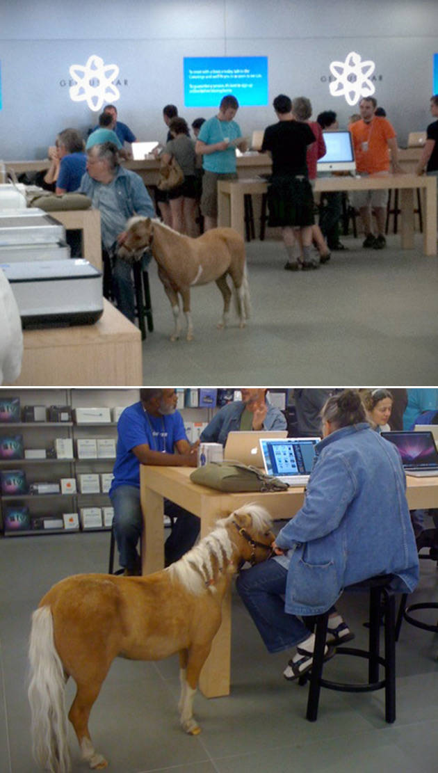 the_craziest_things_that_have_ever_happened_in_the_apple_store_640_high_07