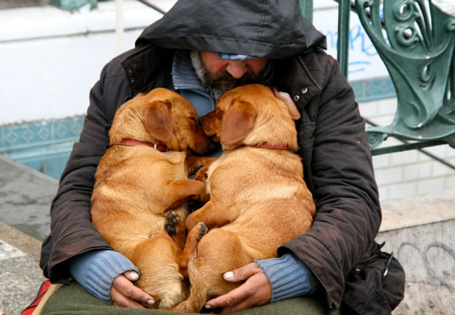 160455-R3L8T8D-650-homeless-dogs-and-owners-12