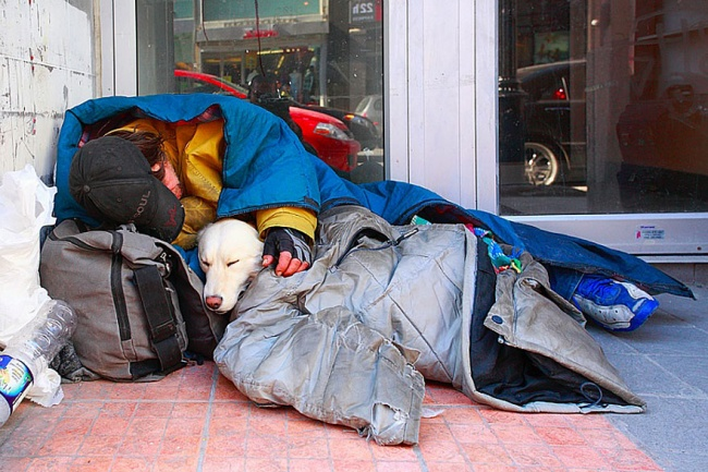 160605-R3L8T8D-650-homeless-dogs-and-owners-2