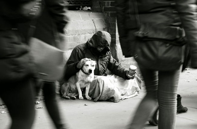 160905-R3L8T8D-650-homeless-dogs-and-owners-6