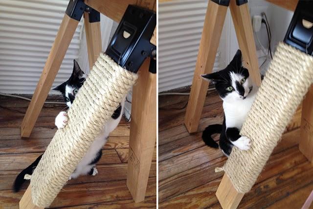 20-trucos-gatos-5