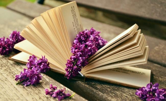 239955-R3L8T8D-650-book-759873_1280