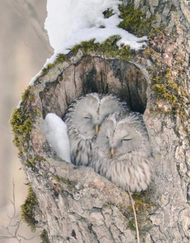7 Curiosos animales que existen en un solo lugar del planeta