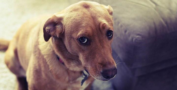 Cosas-que-sólo-los-amantes-de-los-perros-entenderan-1