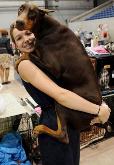 Cosas-que-sólo-los-amantes-de-los-perros-entenderan-10-483x700