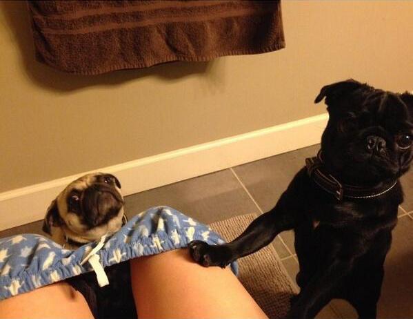 Cosas-que-sólo-los-amantes-de-los-perros-entenderan-4