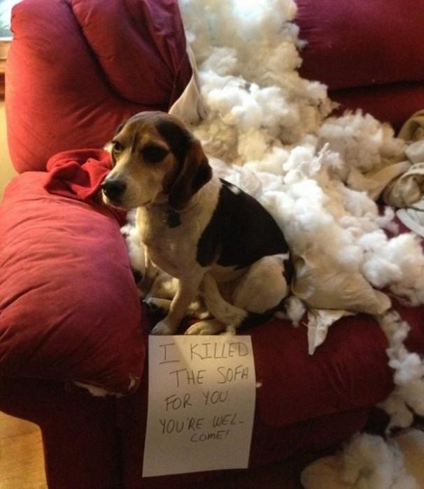 Cosas-que-sólo-los-amantes-de-los-perros-entenderan-7-606x700