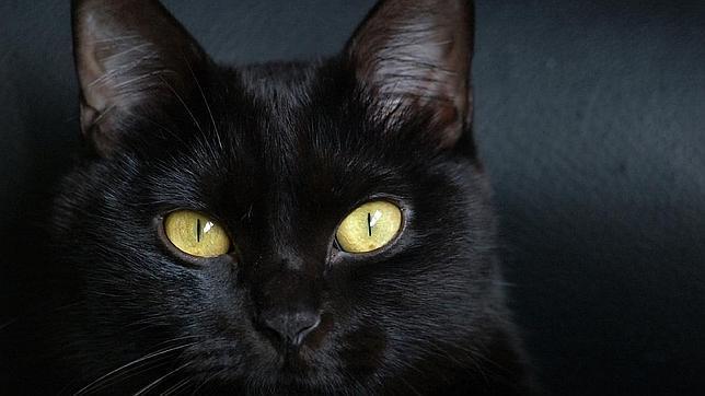 Gato-negro--644x362
