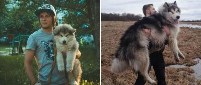 Resultado de imagen para razas de perros que no crecen mucho