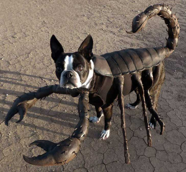 escorpion-instructables-com