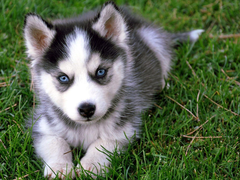 fotos-de-perros-cachorros-pequeños