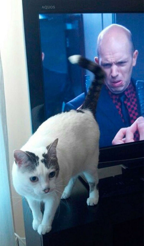 fotos-gatos-momento-justo-1