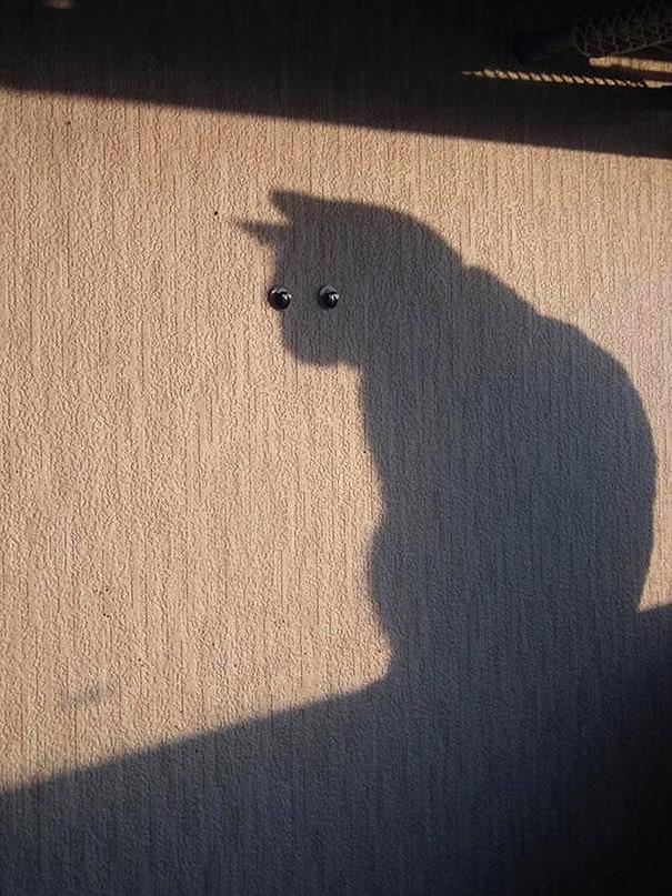 fotos-gatos-momento-justo-11