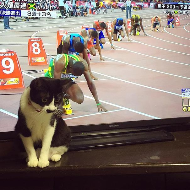 fotos-gatos-momento-justo-12