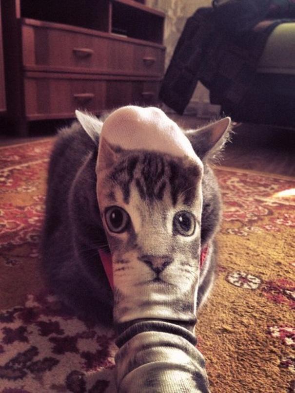 fotos-gatos-momento-justo-14