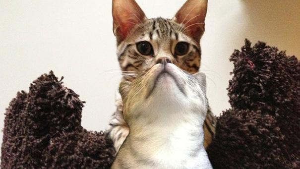 fotos-gatos-momento-justo-16
