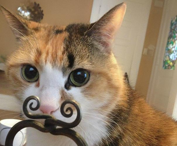 fotos-gatos-momento-justo-2