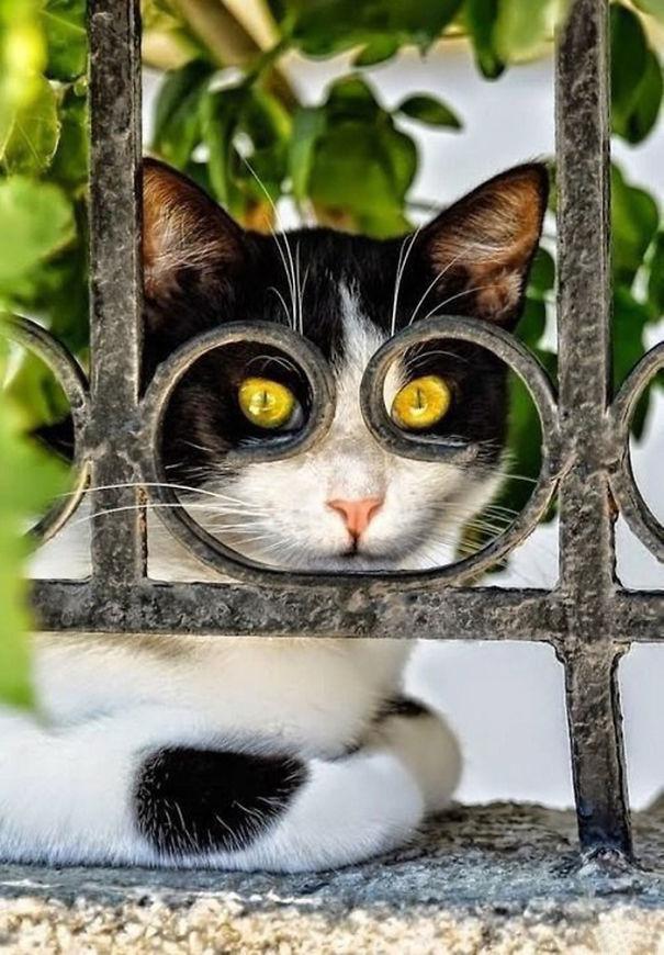 fotos-gatos-momento-justo-20