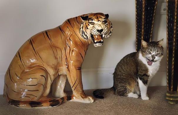 fotos-gatos-momento-justo-3