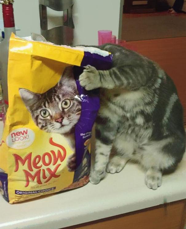 fotos-gatos-momento-justo-4